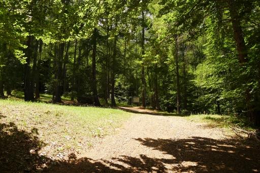 Bois vert site 1 reduit